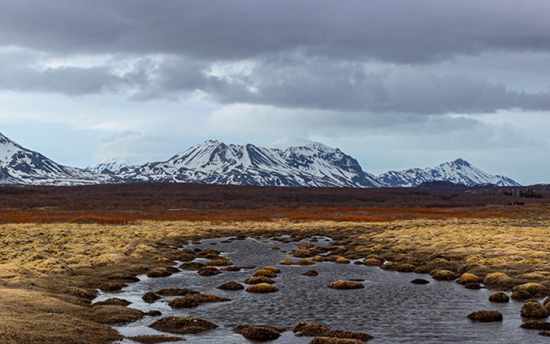 In Memoriam Tundra